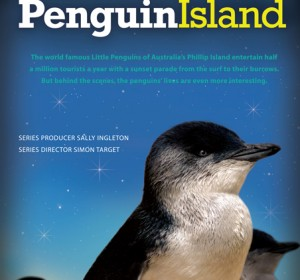<span>Penguin Island</span><i>→</i>